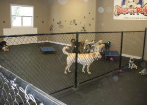 Larger dog play area